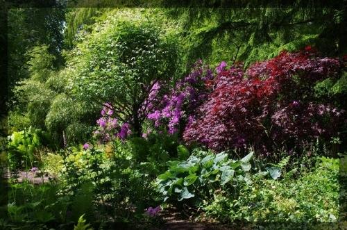イギリス旅行記5 The Beth Chatto Gardens_e0136424_23034005.jpg