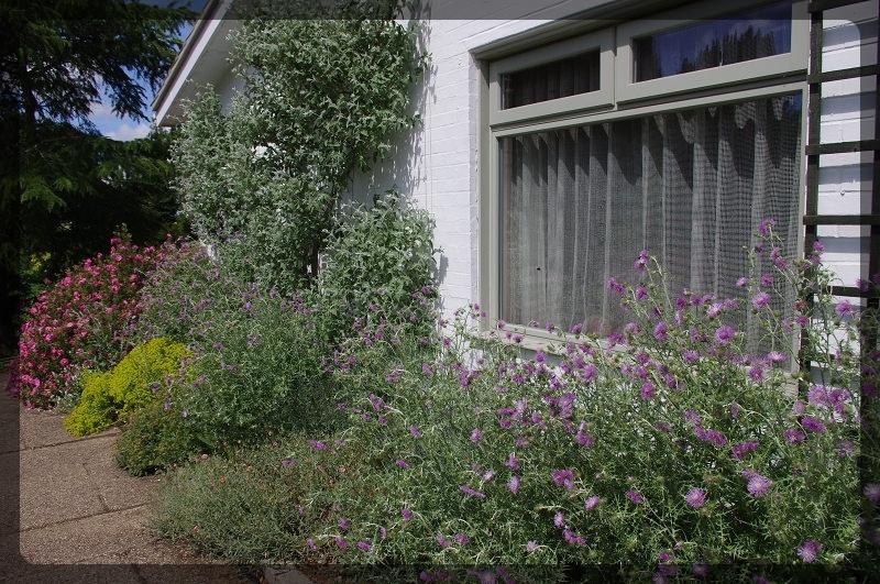 イギリス旅行記5 The Beth Chatto Gardens_e0136424_23035135.jpg