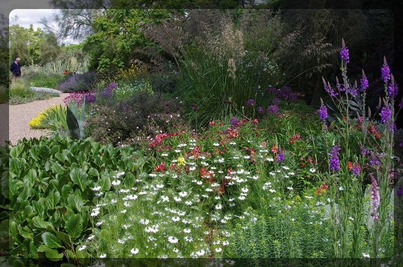イギリス旅行記5 The Beth Chatto Gardens_e0136424_23040224.jpg