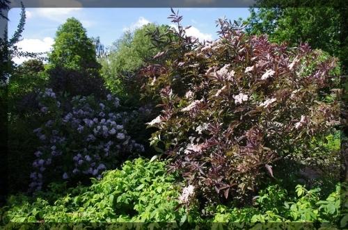 イギリス旅行記5 The Beth Chatto Gardens_e0136424_23041348.jpg