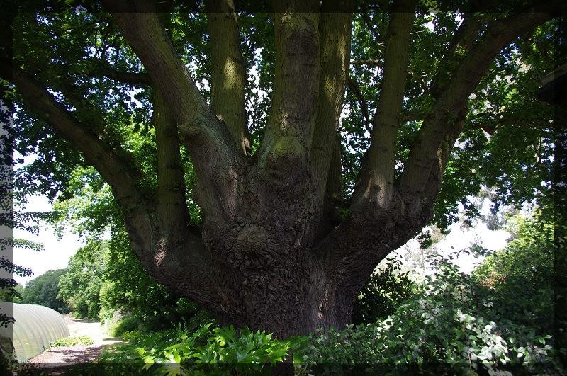 イギリス旅行記5 The Beth Chatto Gardens_e0136424_23041534.jpg