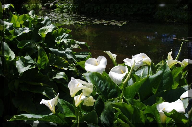 イギリス旅行記5 The Beth Chatto Gardens_e0136424_23042836.jpg