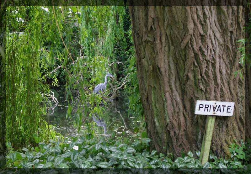 イギリス旅行記5 The Beth Chatto Gardens_e0136424_23044824.jpg