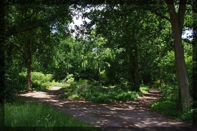 イギリス旅行記5 The Beth Chatto Gardens_e0136424_23045063.jpg