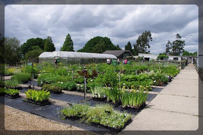 イギリス旅行記5 The Beth Chatto Gardens_e0136424_23045437.jpg