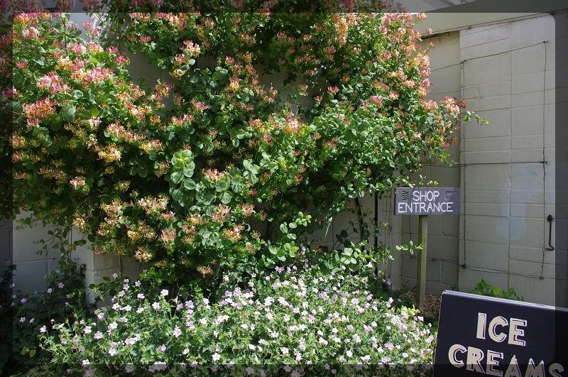 イギリス旅行記5 The Beth Chatto Gardens_e0136424_23050226.jpg
