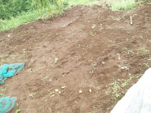 シソの葉を採りに..._b0137932_12345427.jpg