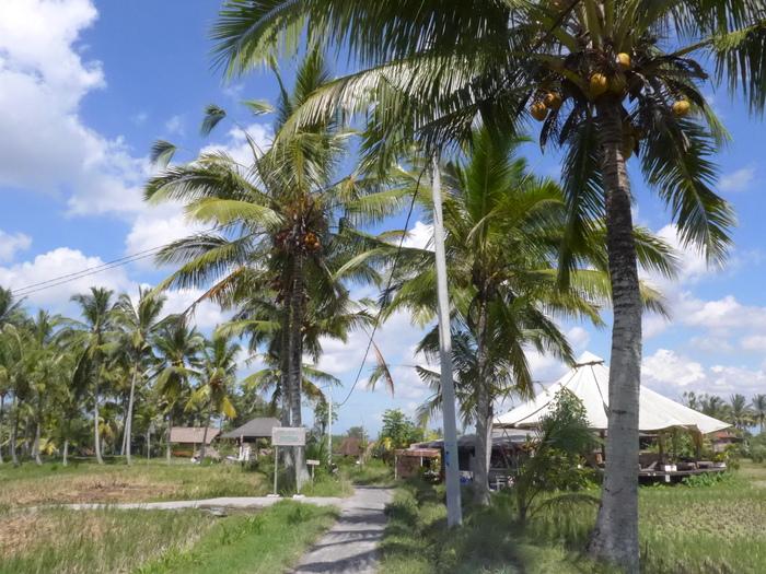 バリ島へ行く。⑫ ~ワルン・ボダッ・マリアへの道~_f0232060_945260.jpg