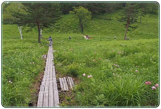 南会津・・・高清水自然公園 ひめさゆり群生地(2)_b0053765_22013967.jpg