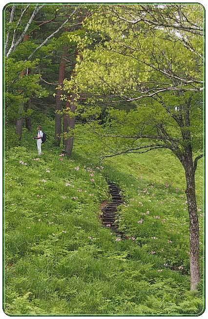 南会津・・・高清水自然公園 ひめさゆり群生地(2)_b0053765_22044399.jpg