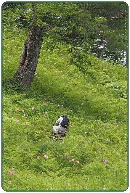 南会津・・・高清水自然公園 ひめさゆり群生地(2)_b0053765_22134684.jpg