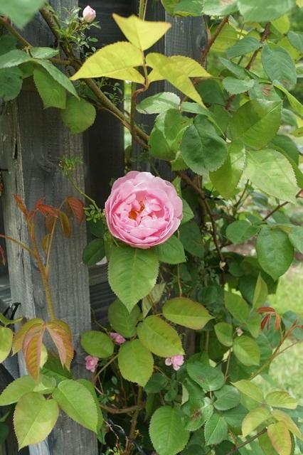 北海道恵庭市テーマパーク「えこりん村」は美しい素敵な花園、えこりん村探訪④_d0181492_0123055.jpg