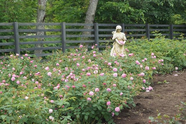 北海道恵庭市テーマパーク「えこりん村」は美しい素敵な花園、えこりん村探訪④_d0181492_0162265.jpg