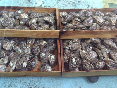 岩牡蠣はじめましたー☆_d0235898_13144221.jpg