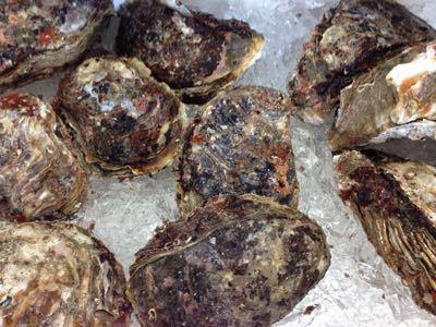 岩牡蠣はじめましたー☆_d0235898_1314454.jpg