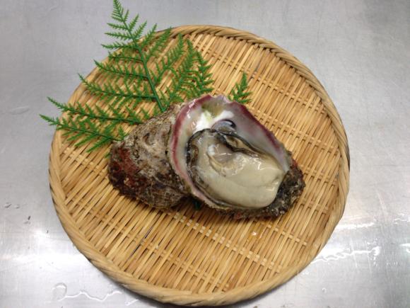 岩牡蠣はじめましたー☆_d0235898_13260925.jpg
