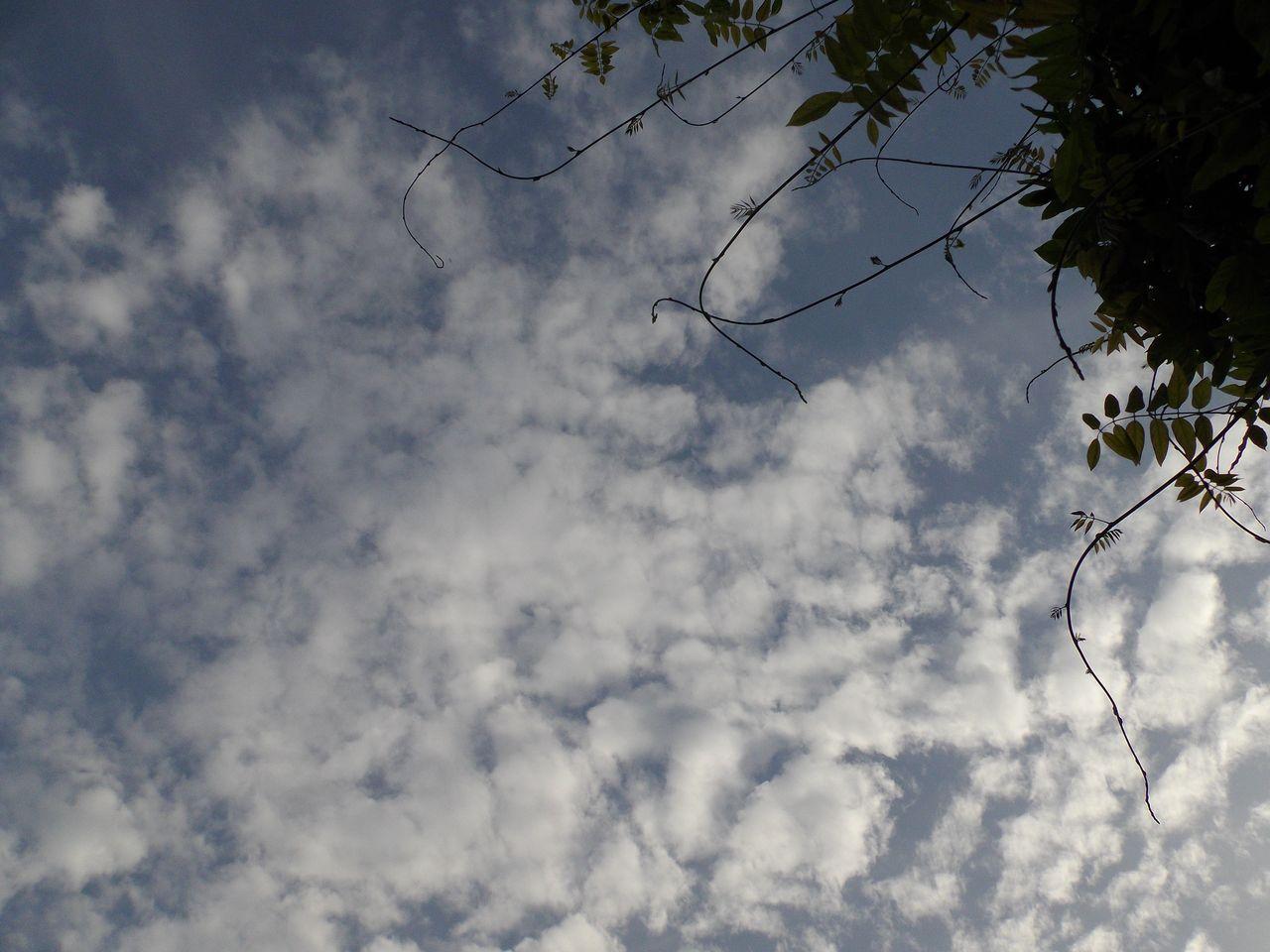 雑草の歩道も輝く夏の日_c0025115_22321443.jpg