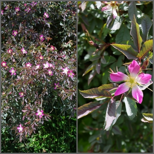 イギリス旅行記5 The Beth Chatto Gardens_e0136424_14463073.jpg