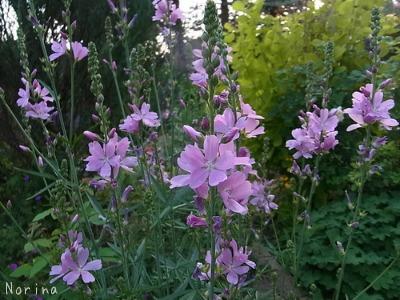 ラベンダーと庭の花_e0326953_13422720.jpg