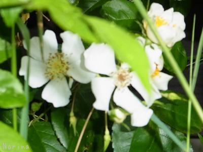 ラベンダーと庭の花_e0326953_13471964.jpg