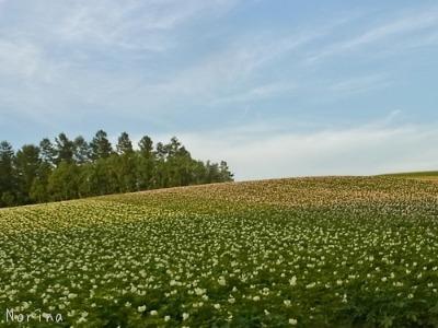 ラベンダーと庭の花_e0326953_13485913.jpg