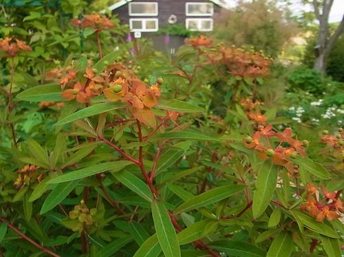 ラベンダーと庭の花_e0326953_13515364.jpg