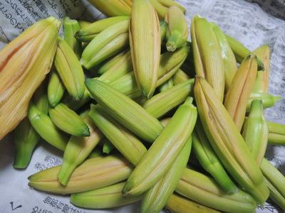 金針菜の胡麻酢和え_b0252363_18544214.jpg