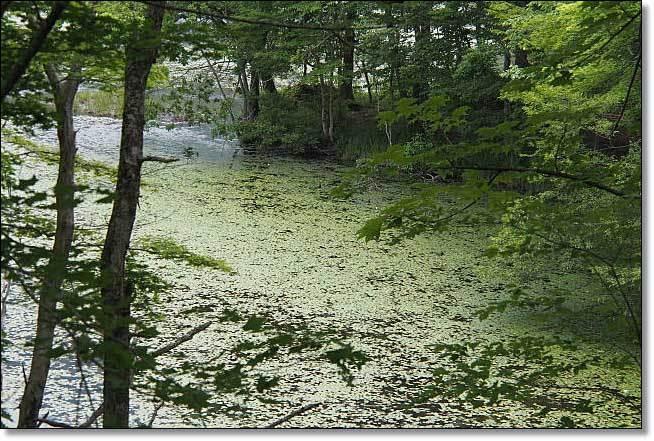 南会津・・・観音沼森林公園(1)_b0053765_14394364.jpg
