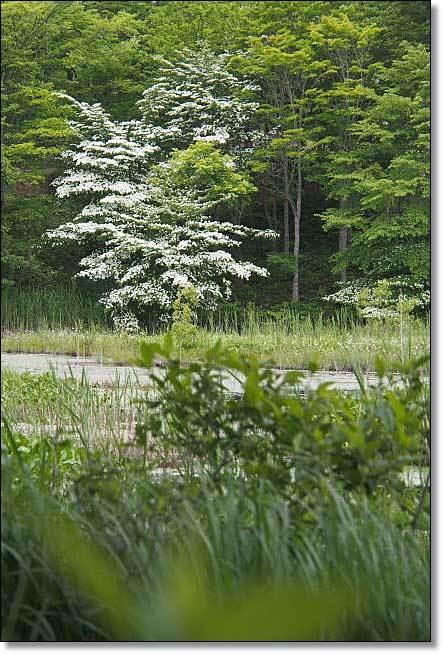 南会津・・・観音沼森林公園(1)_b0053765_14570113.jpg