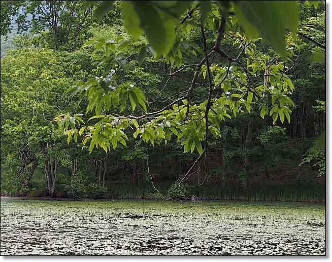南会津・・・観音沼森林公園(1)_b0053765_14585426.jpg