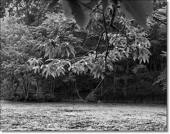 南会津・・・観音沼森林公園(1)_b0053765_15065301.jpg