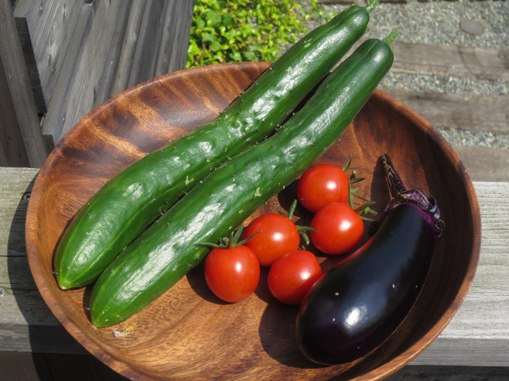 夏野菜収穫_c0310571_11415127.jpg