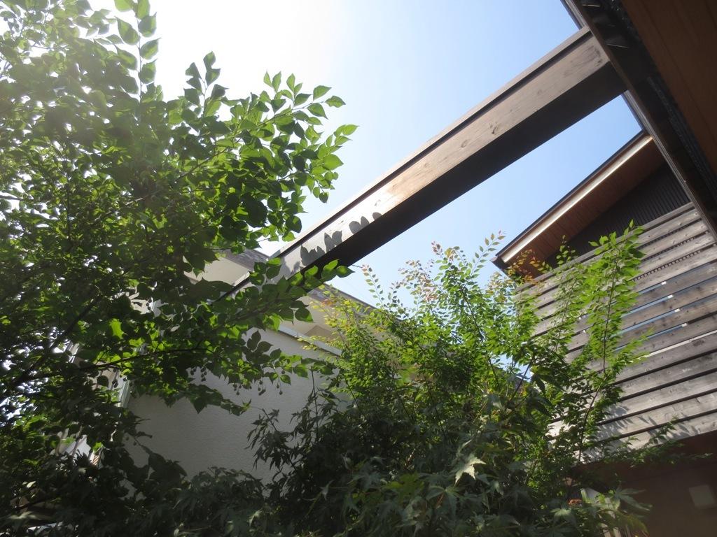 夏野菜収穫_c0310571_11421195.jpg