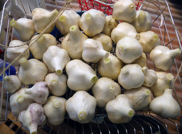 スグリの摘み取り、赤玉ねぎの収穫など♪_a0136293_1983838.jpg