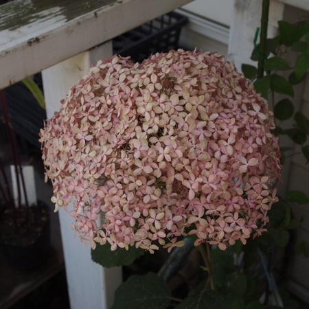 同じお花でも色は微妙に違います_a0292194_16582357.jpg