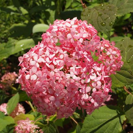 同じお花でも色は微妙に違います_a0292194_16585763.jpg