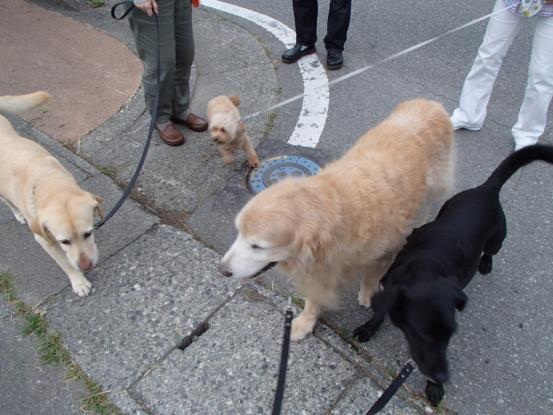 久しぶりに友達犬集合_f0064906_14534795.jpg