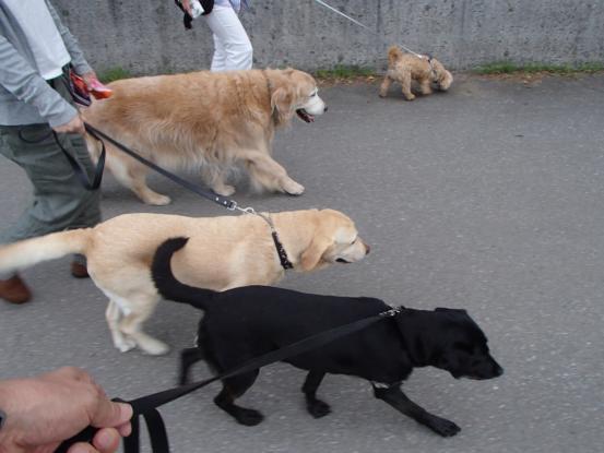 久しぶりに友達犬集合_f0064906_14542683.jpg