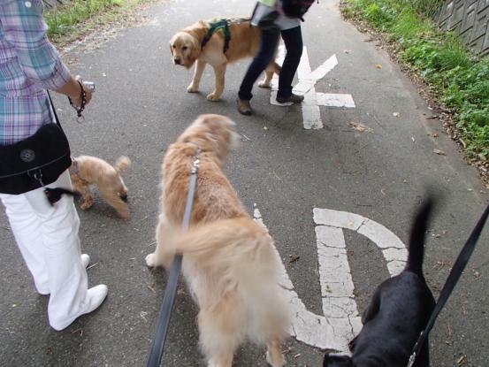 久しぶりに友達犬集合_f0064906_14564191.jpg