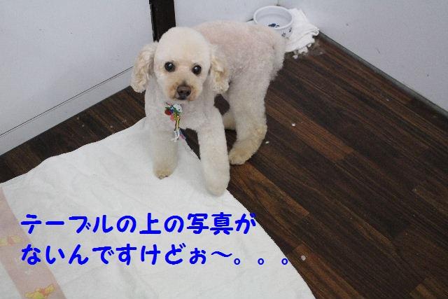 b0130018_1014826.jpg