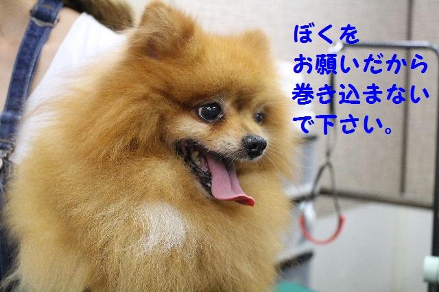 b0130018_10181549.jpg