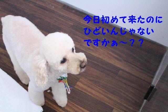 b0130018_102156.jpg