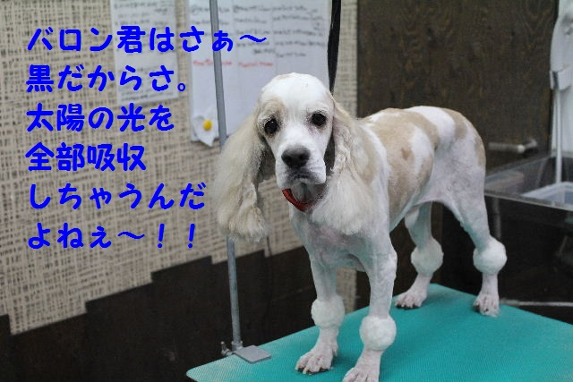 b0130018_1043192.jpg