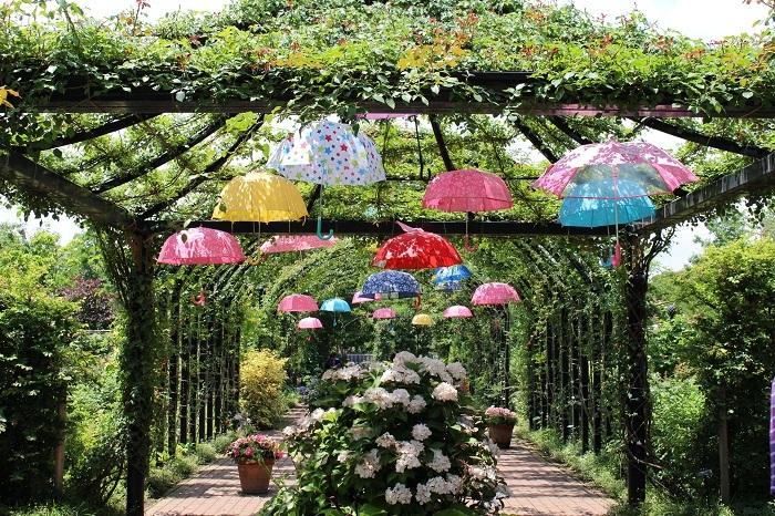 みんなの「紫陽花&雨の季節らしいすてきな一枚」をご紹介!_f0357923_18151231.jpg