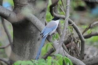 スカイブルーの鳥_b0211926_18351032.jpg