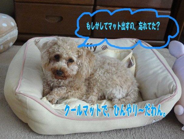 b0149340_20573872.jpg