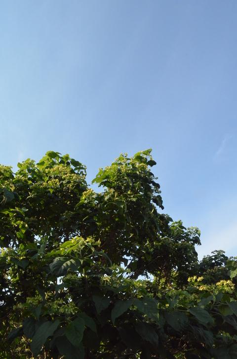 真夏な!_b0207642_7563039.jpg