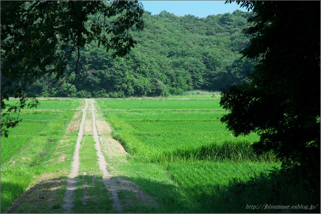 「夏 あぜ道」の画像検索結果