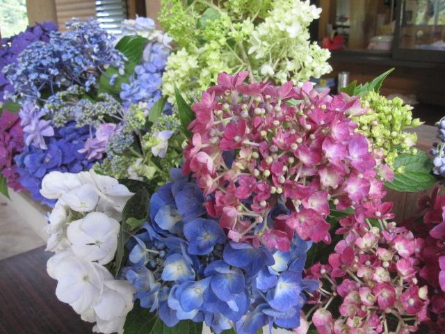 遅咲きの紫陽花が咲いています_f0085369_21295523.jpg
