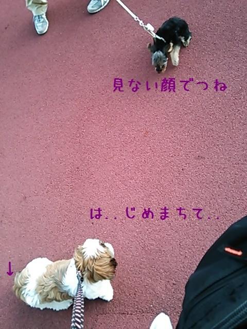 c0363378_20004358.jpg